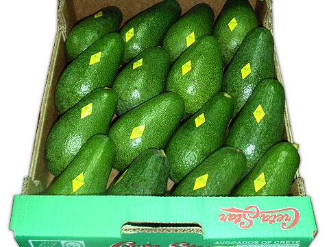Organic Fuerte Avocados